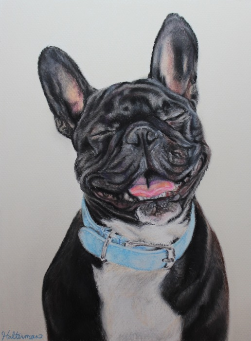 """Happy Frenchie"", soft pastel on paper, 9"" x 12"""
